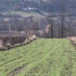 Aktivnosti kancelarije za poljoprivredu opštine Žagubica