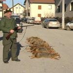 Tradicionalna šakalijada u Grabovici kod Kladova