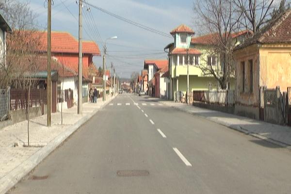 Sadnja drvoreda u ulici Cara Dušana u Zaječaru