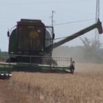 Zaječar: Prinosi žita na teritoriji zaječarskog okruga manji od očekivanih
