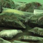 Policija u okolini Zaječara pronašla oko 450 grama marihuane