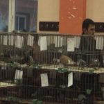 Veliki boj učesnika na međunarodnoj izložbi sitnih životinja u Grljanu