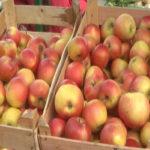 Na zaječarskoj pijaci od voća najzastupljenije jabuke