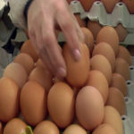 Zaječarci uveliko kupuju jaja jer se očekuje njihovo poskupljenje pred Uskrs