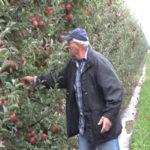 Veliko interesovanje za poljoprivredne subvencije opštine Negotin