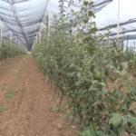 Zaječar izdvojio skoro 19 miliona dinara za razvoj poljoprivrede