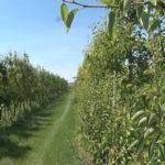 Izmene u subvencionisanju poljoprivredne proizvodnje (VIDEO)