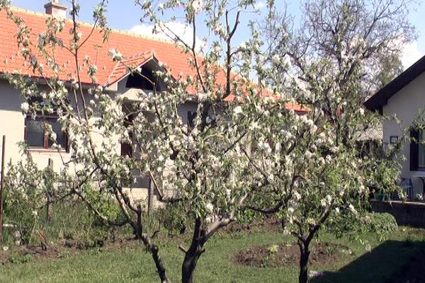 Kako prebroditi sezonu alergija na polen (VIDEO)