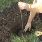 Sadnjom drveća srednjoškolci brinu o životnoj sredini (VIDEO)