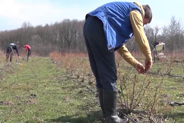 Do milion i po dinara mladim poljoprivrednicima (VIDEO)